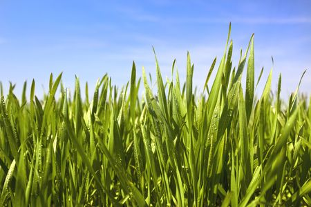 green grass, water drops and blue sky / background Stock Photo - 5304800