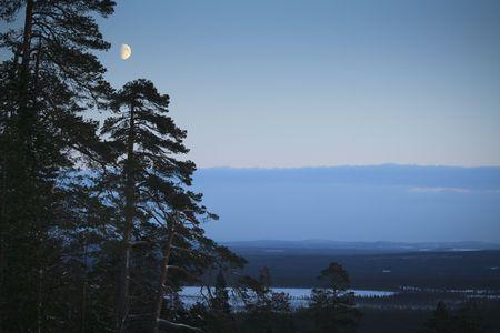 winter night  moonlight  landscape  Finland photo