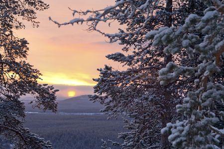 january sunrise: Ma�ana de invierno  pino, la luz del sol y la nieve