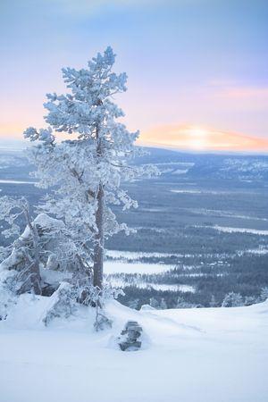 january sunrise: �rbol cubierto de nieve en la madrugada y ma�ana de invierno  luz solar Foto de archivo
