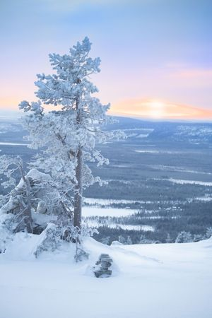 Snowy tree at dawn  winter morning  sunlight photo