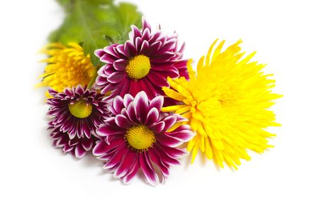 purple and yellow flowers  isolated on  white background photo