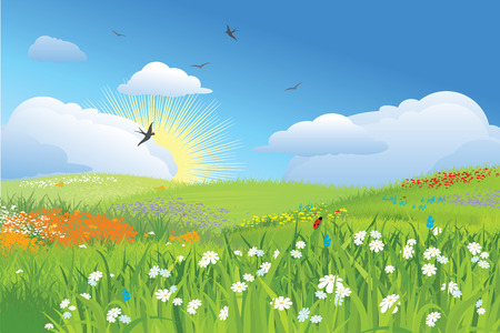 sunbeams: Colorfull meadow  flower and grass   blue sky  vector