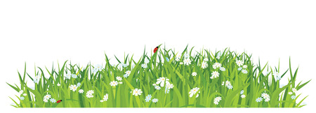 grass vector: grass and flowers on white background  horizontal  vector