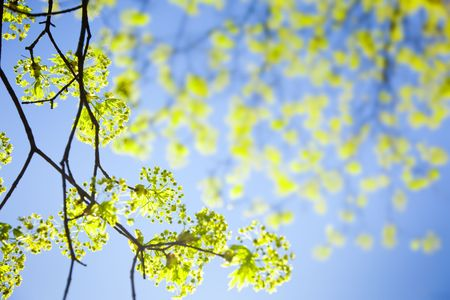 young spring  leaves against the blue sky / with copy space for you Stock Photo - 6846967