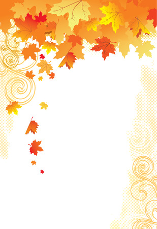 fall background: Autumn Background   gold leaves on white background   Illustration