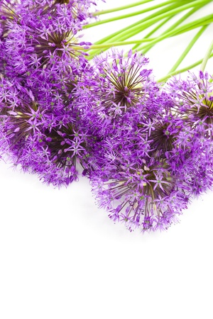 bouqet: Bouqet of Allium  beautiful flowers  isolated on white Stock Photo