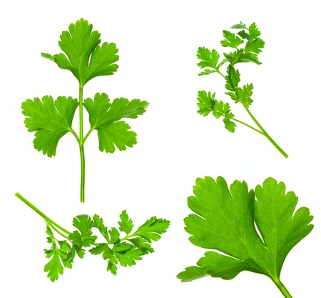 Collection of Parsley Twigs / Macro and Super Macro / XXXL size Stock Photo - 12795726