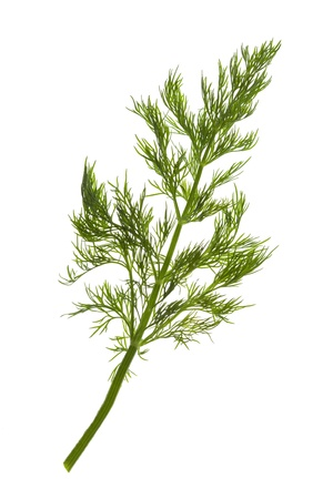 Fresh Dill / close-up / isolate on white Stock Photo - 12819833