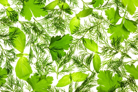 Fresh Basil, Parsley and Dill  background  isolated on white  back lit photo