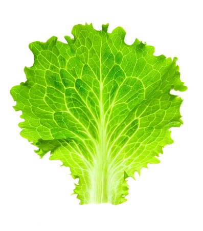 Fresh Lettuce  one leaf isolated on white background  close-up Stock Photo