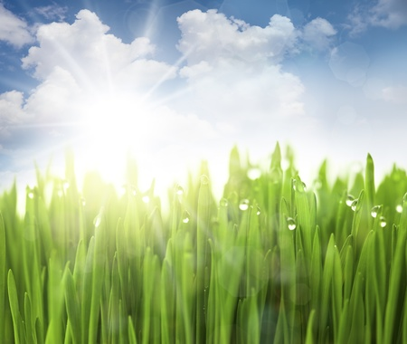 Sun, Sky and Grass with drops / defocused light effects Stock Photo - 13756162