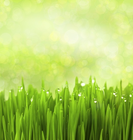 Green Grass with Water Drops on Abstract Bokeh Background Stock Photo - 13756183