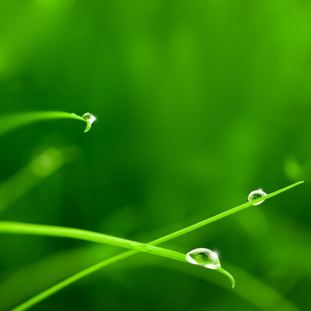 Water Drops on Grass with Sparkle  copy space photo