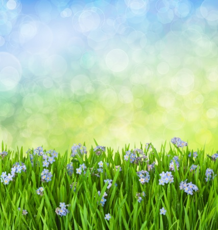 field of flowers: Myosotis Blue Flowers into Green Grass with Waterdrops on Defocused Background