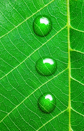 Water Drops on a Green Leaf  /  Ecology concept / Super Macro Stock Photo - 14158356