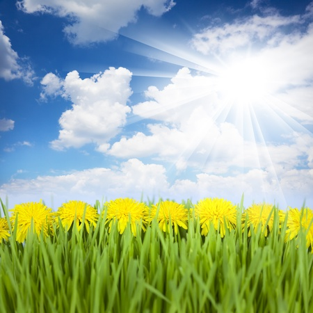Yellow Dandelions, Green Grass and Blue Sky with Sun / beautiful picture Stock Photo - 14158385