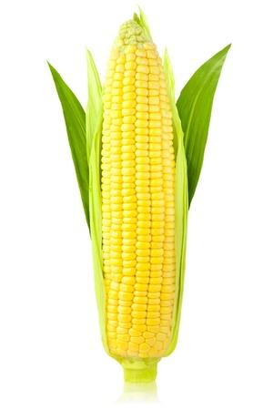 elote: Mazorca de maíz con hojas verdes  vertical  aislado sobre un fondo blanco Foto de archivo