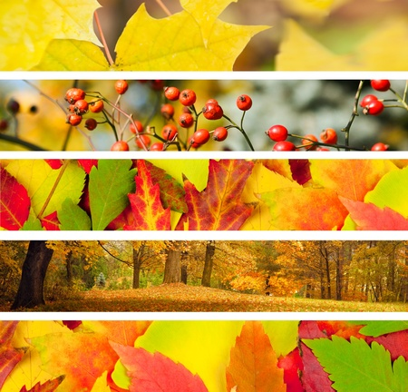 Set of 5 Different Autumns Banners  Nature photo