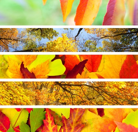 Set of 5 Different Autumns Banners  Nature Backgrounds Stock Photo