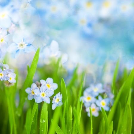fantasy Gentle Floral Background  Blue Flowers and Defocused Backdrop