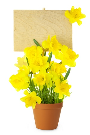 Wood Sign with Daffodil (Narcissus) Flowers / empty board for your text /  isolated on a white Stock Photo - 17178572