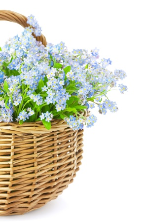 Bouquet of blue spring flowers in basket isolated on white background   Gift with love Stock Photo - 17567424