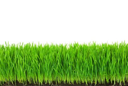 Green Grass mit fruchtbaren Böden und Tropfen Tau auf weiß mit Kopie Raum isoliert