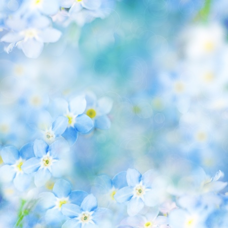 fantasy Gentle Floral Background / Blue Flowers and Defocused Backdrop photo