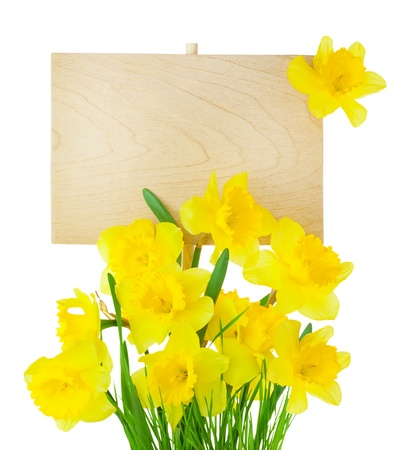 Beautiful Narcissus ( Daffodil ) and Empty Sign for message / wooden panel / isolated on white Stock Photo - 18023331