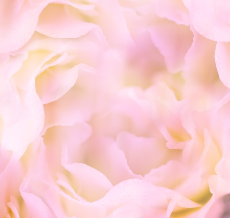 Gentle Floral Background   Flower Stock Photo - 20682328