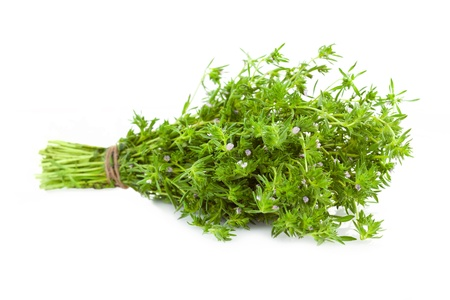 Bunch of fresh Thyme    isolated on white background photo