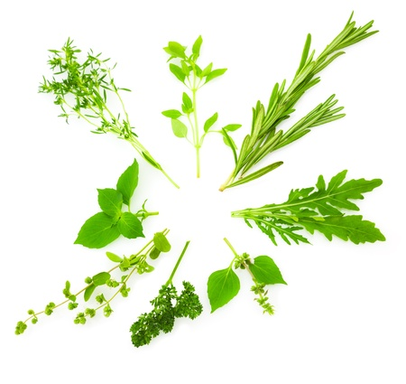chive: Circle Border of Different  Fresh Spice Herbs  isolated on white background  Basil, Chive, Majoram, Oregano, Parsley, Thyme, Rucola and Rosemary Stock Photo