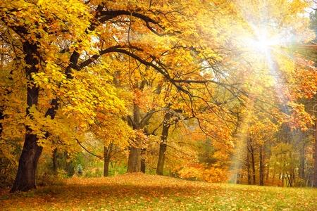 Goldene Herbst mit Sonnenlicht und Sonnenstrahlen  Schöne Bäume im Wald Lizenzfreie Bilder