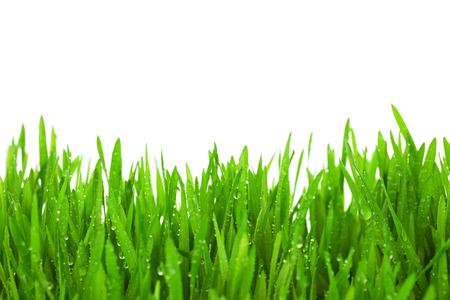 Hierba verde fresca con gotas de rocío aislado en blanco, con copia espacio