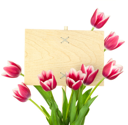 tulips isolated on white background: Beautiful Tulips and Empty Sign for text   wooden panel   isolated on a white background