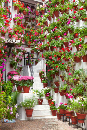 fiesta popular: Flowerpots and Flowers on a white wall,  Old European Town, Spain, Cordoba Stock Photo
