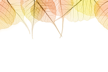 Border of Autumn color Leaves - natural cell structure, isilated on white