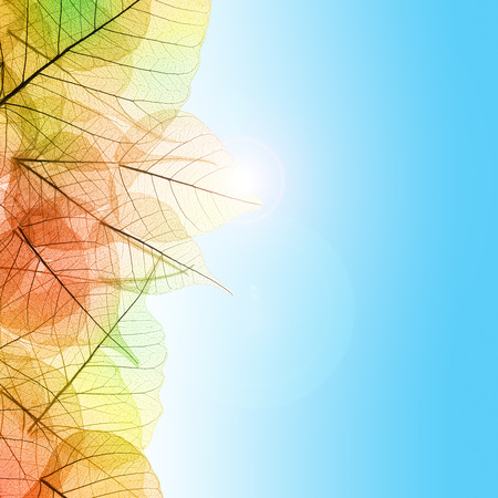 Autumn composition with transparent Leaves and blue sky background photo