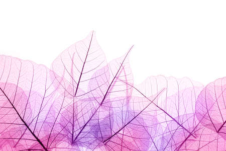 skeleton: Pink and Purple Border of transparent Leaves - isolated on white background