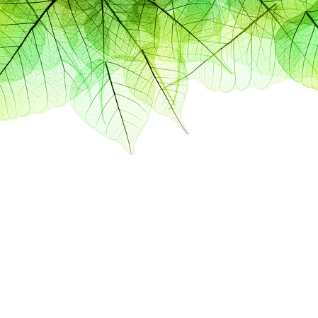 Border of Green  Leaves - isolated on white background Stock Photo