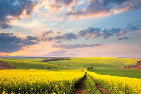 flowers: campos de flores amarillas, carretera de tierra y hermoso valle, paisaje de primavera Foto de archivo