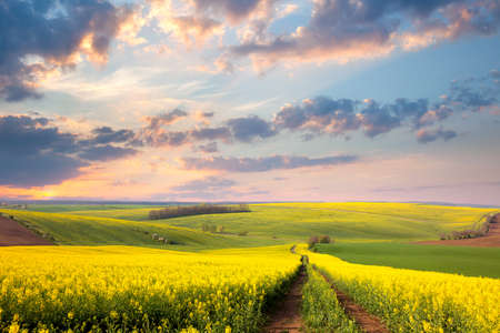 green meadow: Yellow flowering fields, ground road and beautiful valley, nature spring landscape Stock Photo