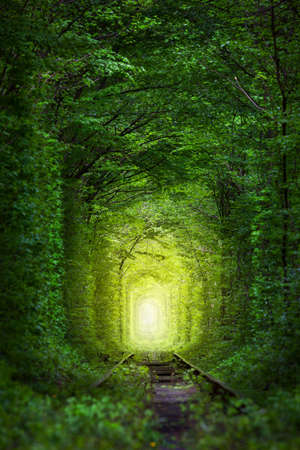 forest railroad: Fantastic Trees - Tunnel of Love with fairy light afar, magic background