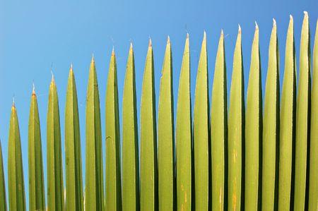 leaflets: Palm leaflets