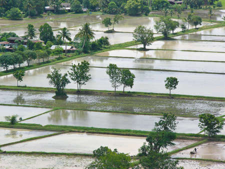 Flooded paddy fields in central Thailand