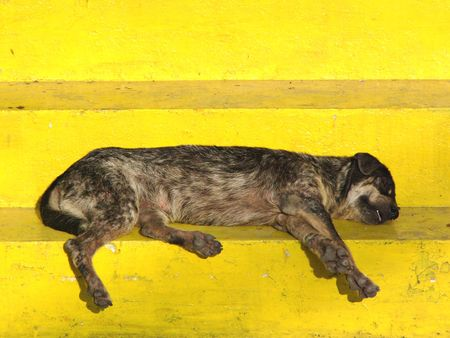Mongrel sleeping on temple staps in Thailand photo