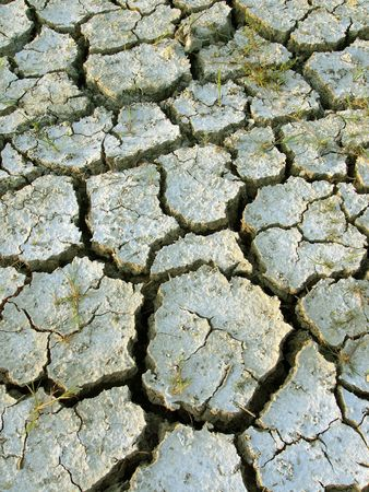 caked: Dry field of cracked earth