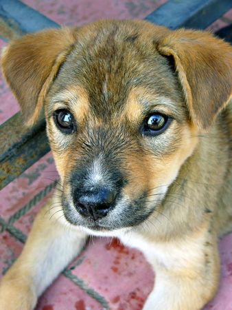 endearing: Stray puppy from Thailand