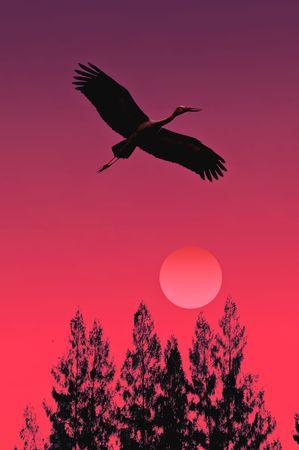 openbill: Openbill stork flying